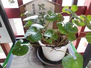 久能山(13)