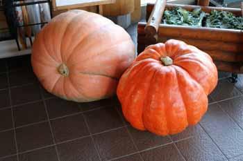 20150923_小山田農園さんの巨大かぼちゃ