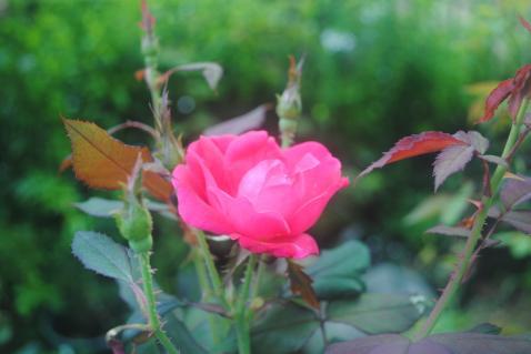DSC_0013_convert_20150927193605.jpg