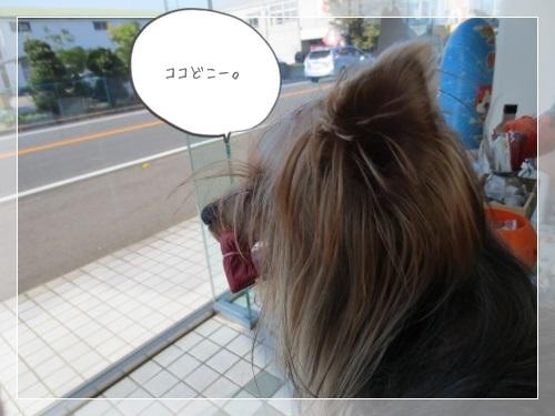IMG_2147 (500x375)1