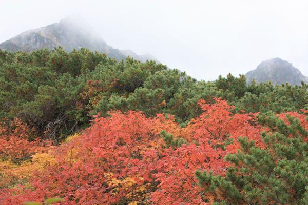 八方尾根から唐松岳