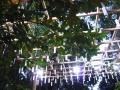 ナンフェア 川越氷川神社 風鈴小路