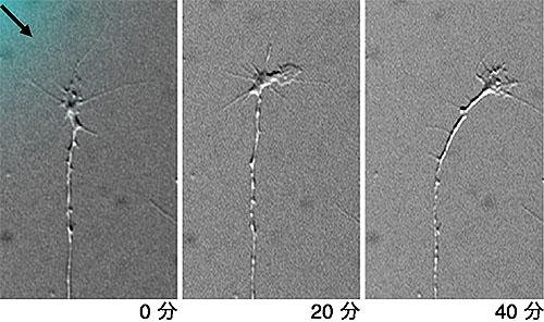 リゾホスファチジルグルコシド