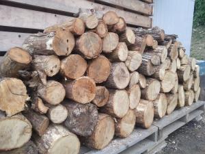 150825栗の木