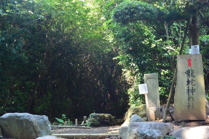 竜神社の杜