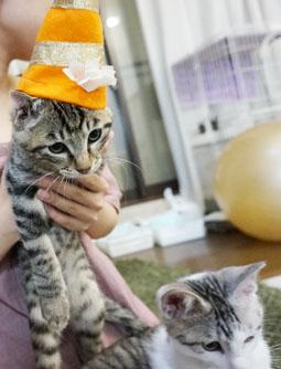 魔法帽子2