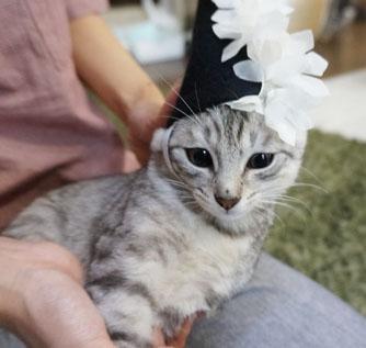魔法帽子3