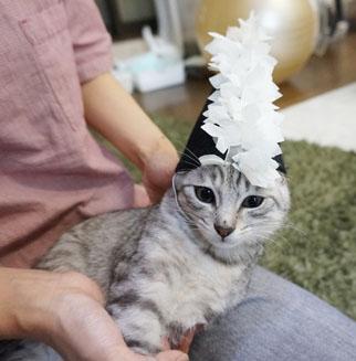 魔法帽子4