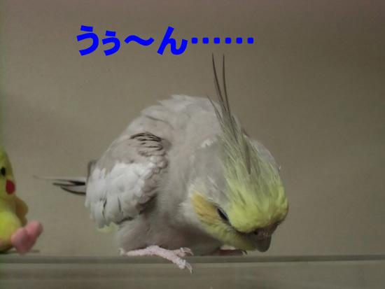 どうしたの、風?