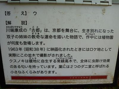 15,9,14 クスノキ並木道 (3)