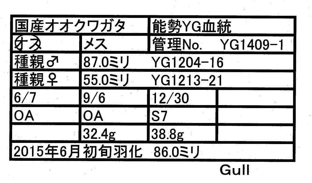 Gull-YG1409-01♂-86mm