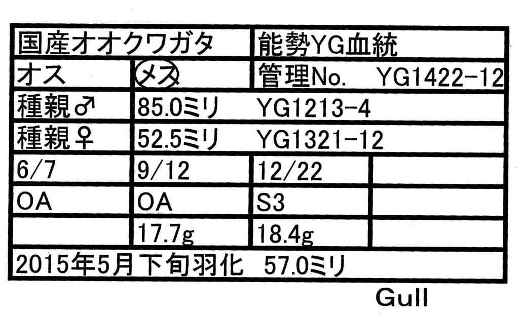 Gull-YG1422-12♀-57mm