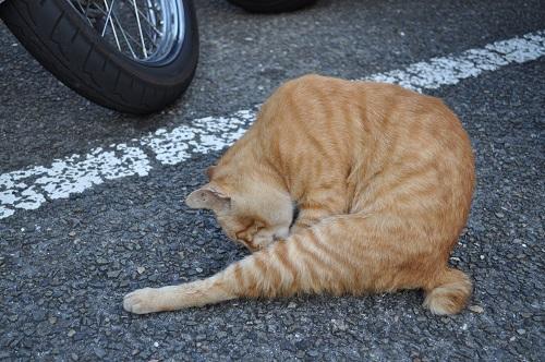 足摺岬猫1
