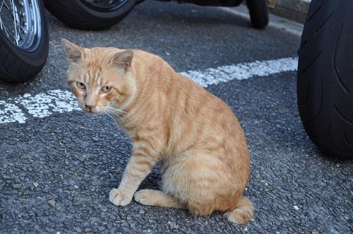 足摺岬猫2