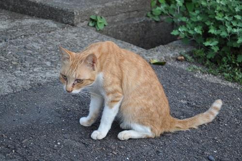 足摺岬猫3