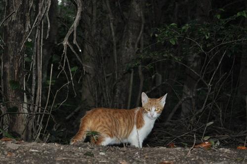 足摺岬猫5
