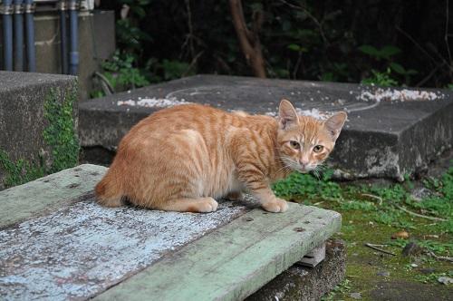 足摺岬猫4