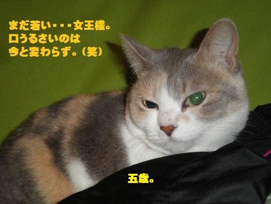 20150903-03.jpg