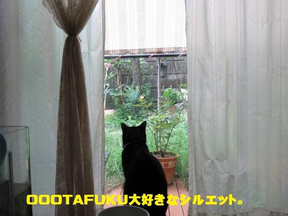 20150911-01.jpg