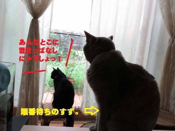20150911-03.jpg