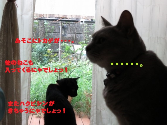 20150911-04.jpg