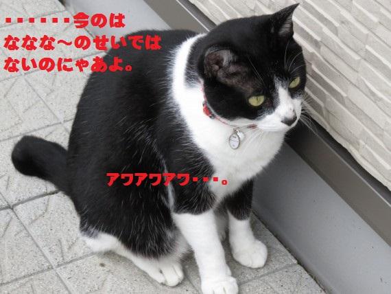 20150912-04.jpg