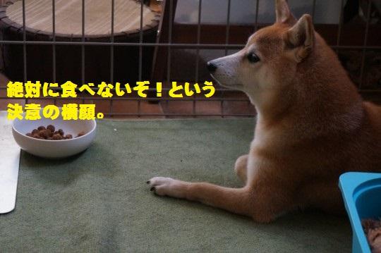 20150919-03.jpg