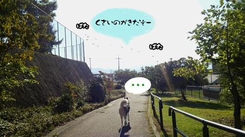 DSC_1457_20150824152209307.jpg
