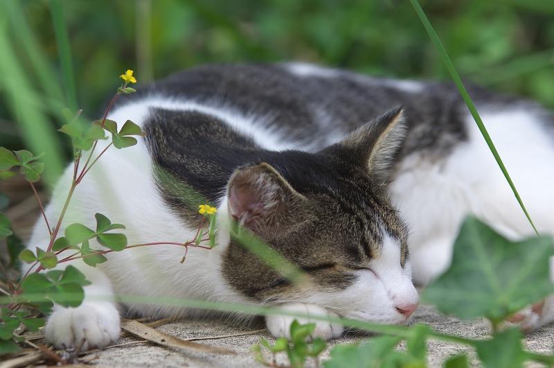 天保山観覧車 猫