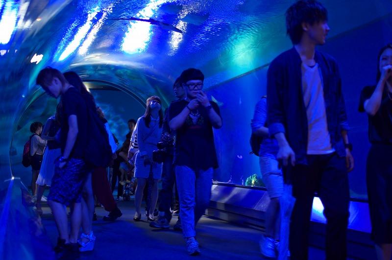 海遊館 サメ水槽