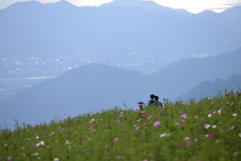 鷲ヶ峰 コスモス