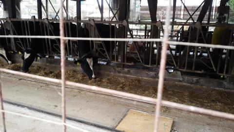 牛さんも・・・いつも美味しくジェラート頂いております・・・