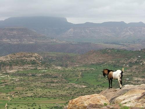 Ethiopian_Highlands_01.jpg