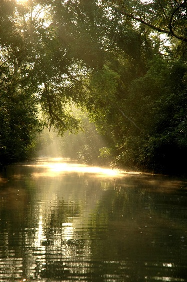 Sun_in_Sunderbans.jpg