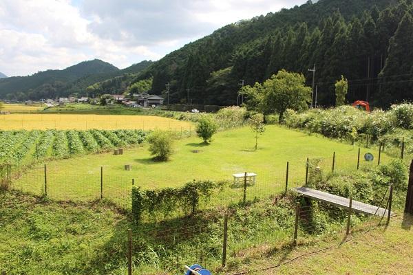 2015.09.22 ちわわん②-1
