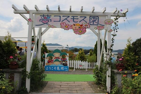 2015.10.05 亀岡夢コスモス園①-1