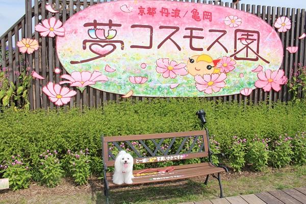 2015.10.06 亀岡夢コスモス園②-1