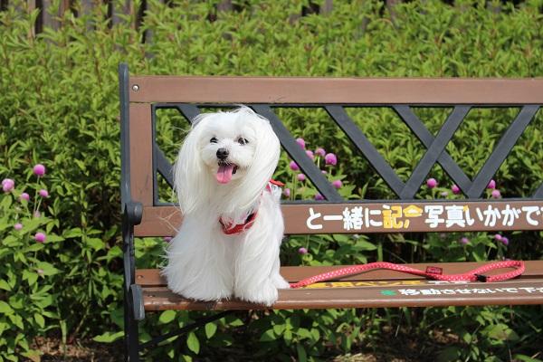 2015.10.06 亀岡夢コスモス園②-2