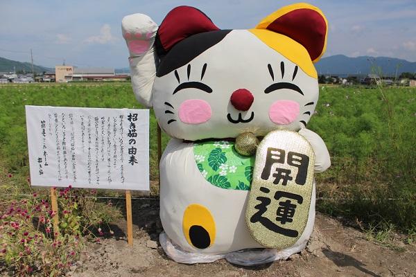 2015.10.06 亀岡夢コスモス園②-14
