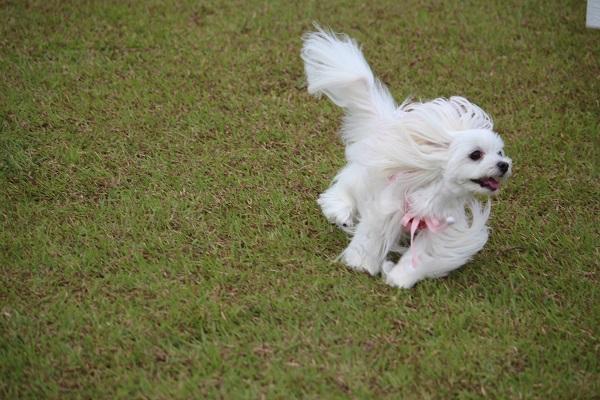 2015.10.10 亀岡夢コスモス園②-3