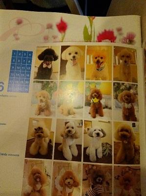 DSC_0017_2015091120471271f.jpg