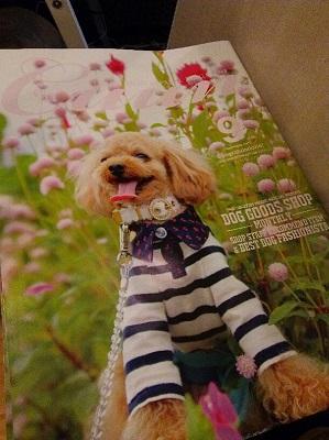 DSC_0018_201509112047140cd.jpg