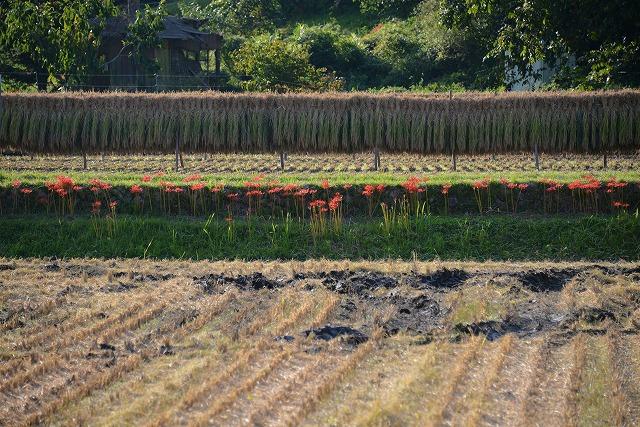 吉舎の秋1