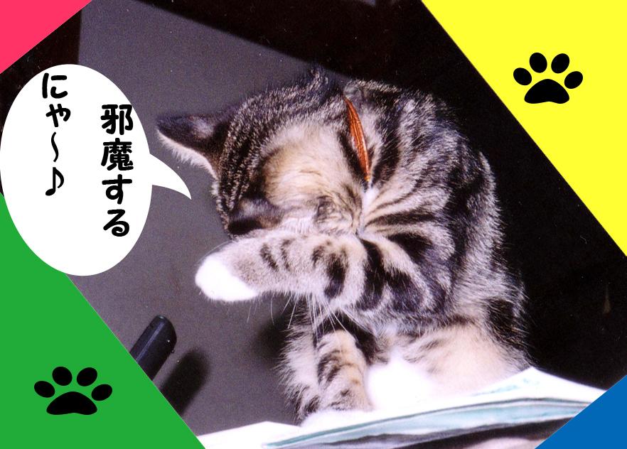 piccolo-album051のコピー