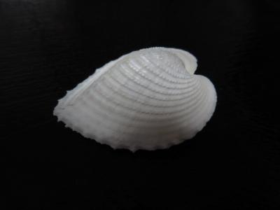 150927-9.jpg