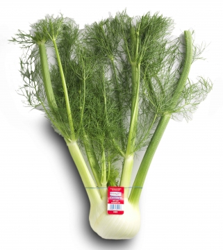 Ocean-Mist-Farms-FULL-FERN-bulk-fennel-e1395104474750.jpg