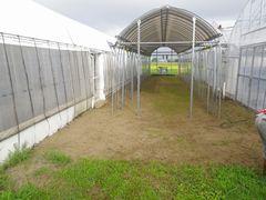 [写真]雑草をすべて刈り取ってむき出しの地面となった雨よけアーケードの様子