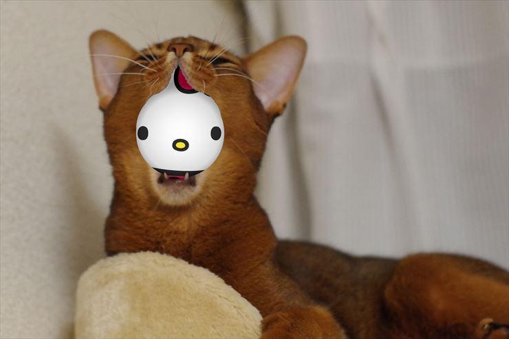 kaburi_kitty_R.jpg