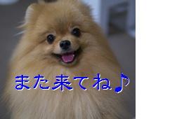 blog201509また来てね