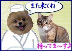 blog201509また来てね2